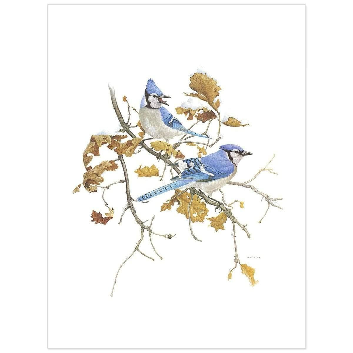 Blue Jays - Art Print by Glen Loates from the Glen Loates Store