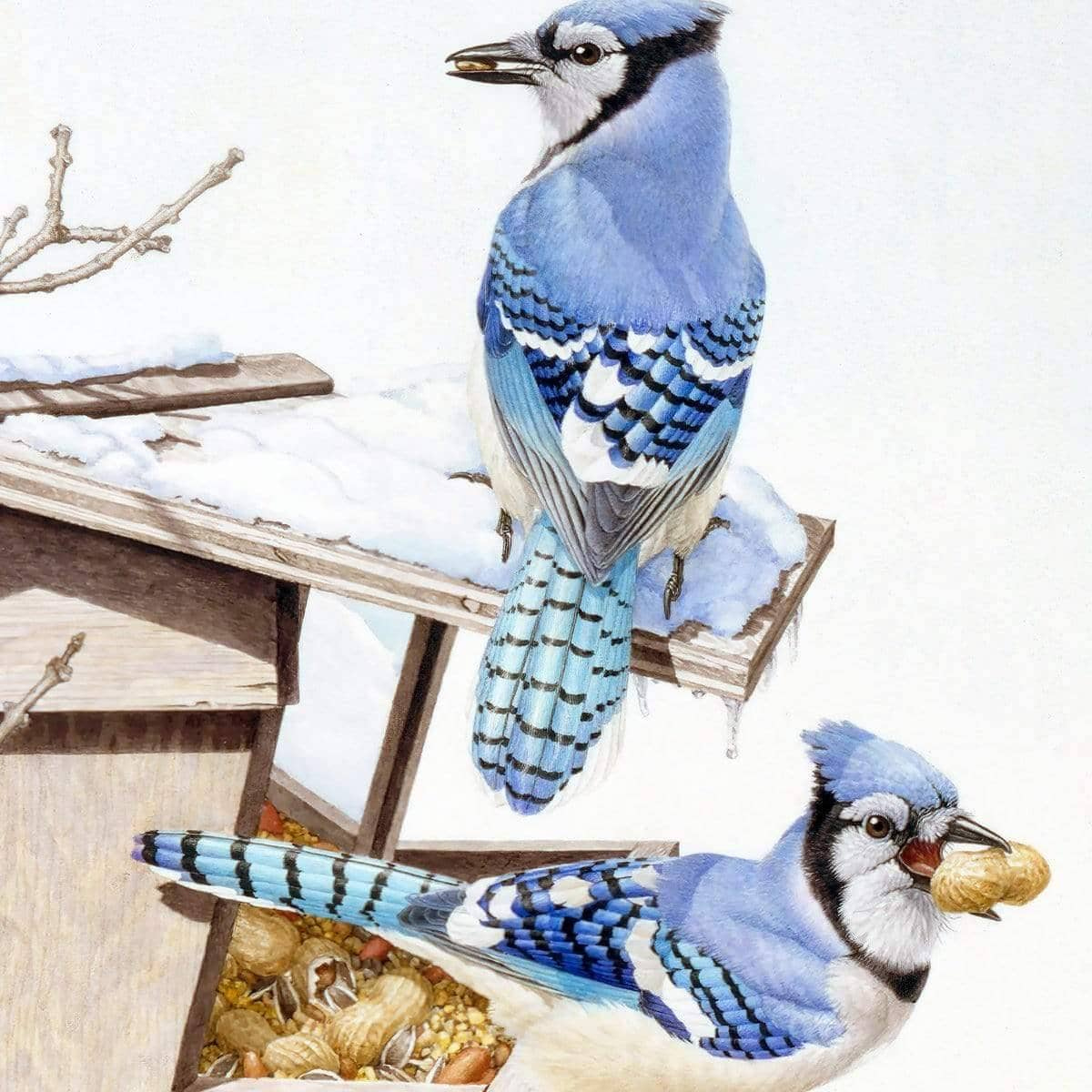 Blue Jays At My Feeder - Art Print by Glen Loates from the Glen Loates Store