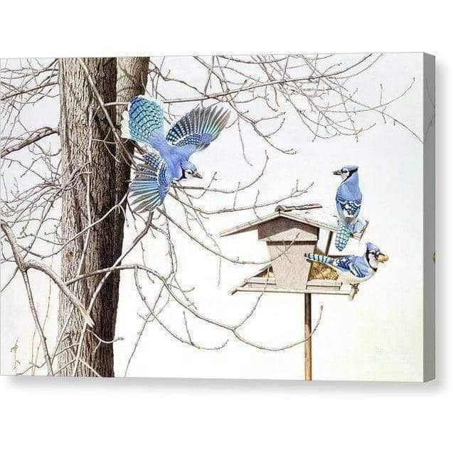 Blue Jays At My Feeder - Canvas Print by Glen Loates from the Glen Loates Store