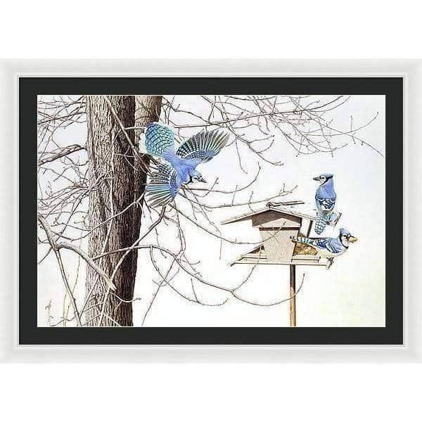 Blue Jays At My Feeder - Framed Print by Glen Loates from the Glen Loates Store
