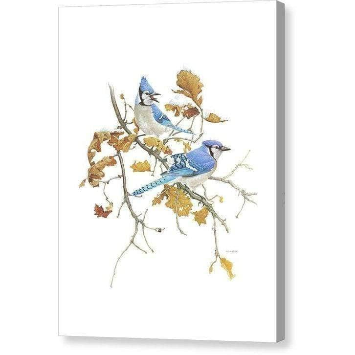 Blue Jays - Canvas Print by Glen Loates from the Glen Loates Store