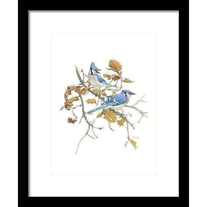 Blue Jays - Framed Print by Glen Loates from the Glen Loates Store