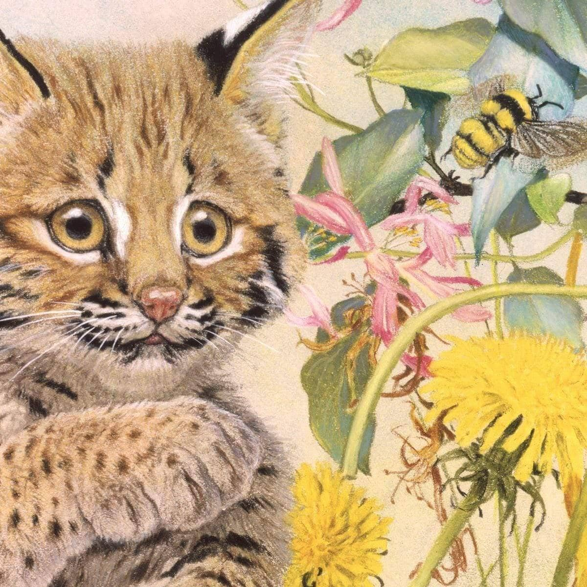 Bobcat Cub - Art Print by Glen Loates from the Glen Loates Store