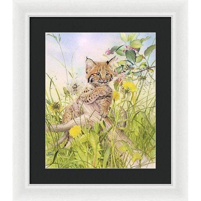 Bobcat Kitten - Framed Print by Glen Loates from the Glen Loates Store