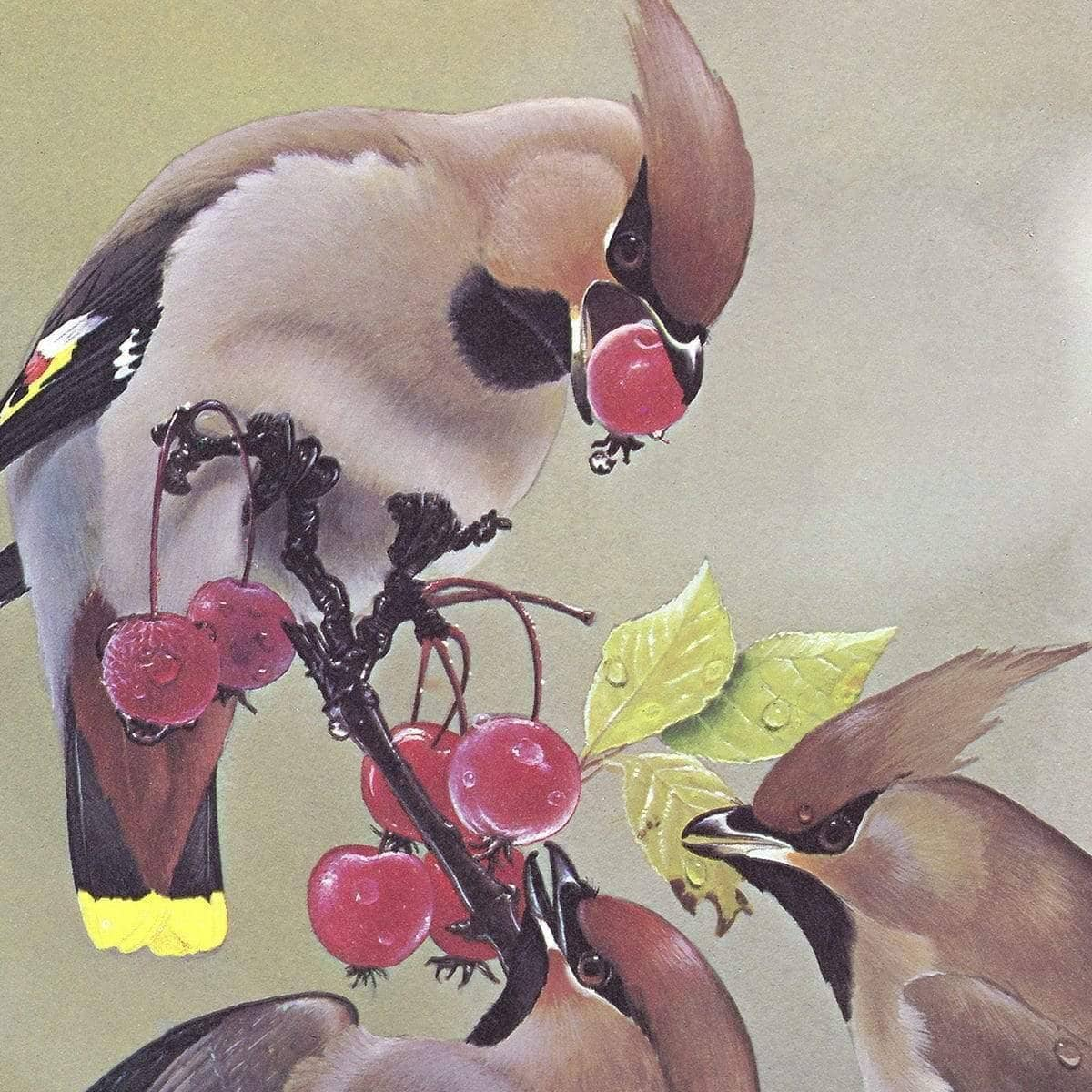 Bohemian Waxwing - Art Print by Glen Loates from the Glen Loates Store