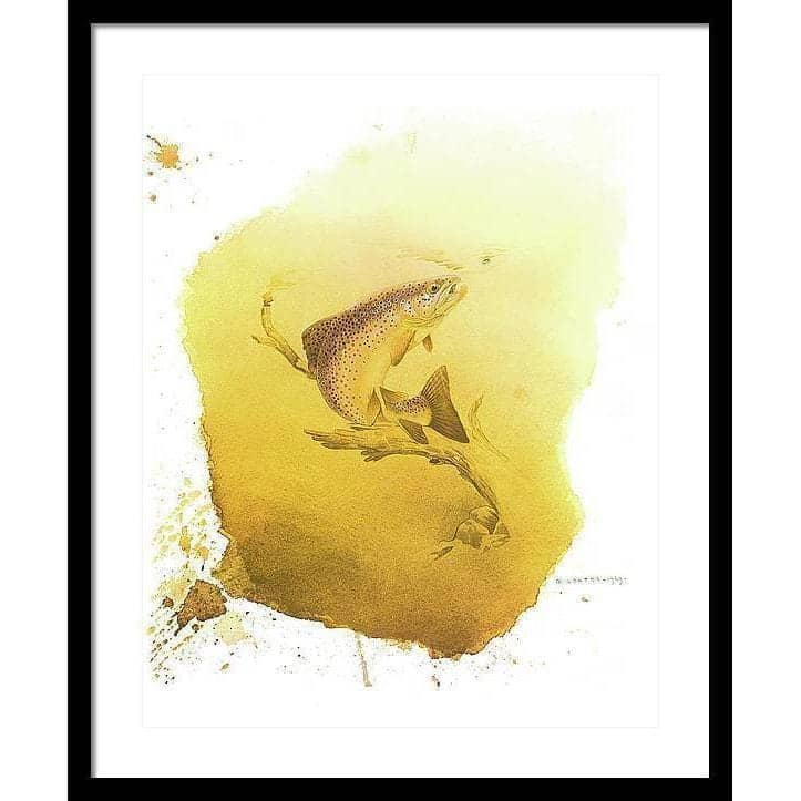 Brown Trout - Framed Print by Glen Loates from the Glen Loates Store