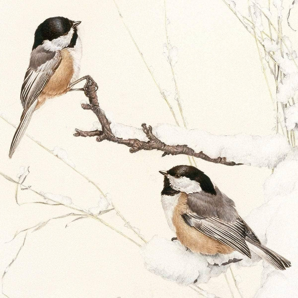Black-Capped Chickadees - Art Print