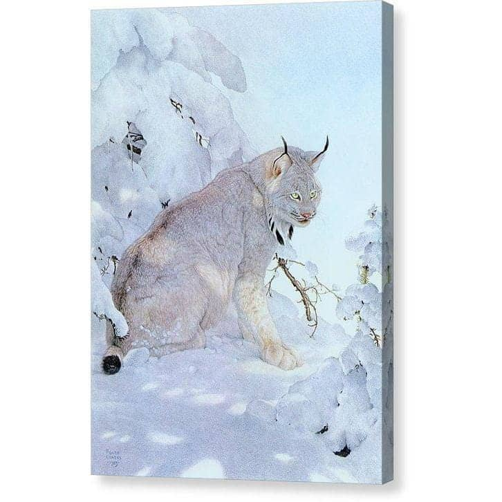 Canada Lynx - Canvas Print by Glen Loates from the Glen Loates Store