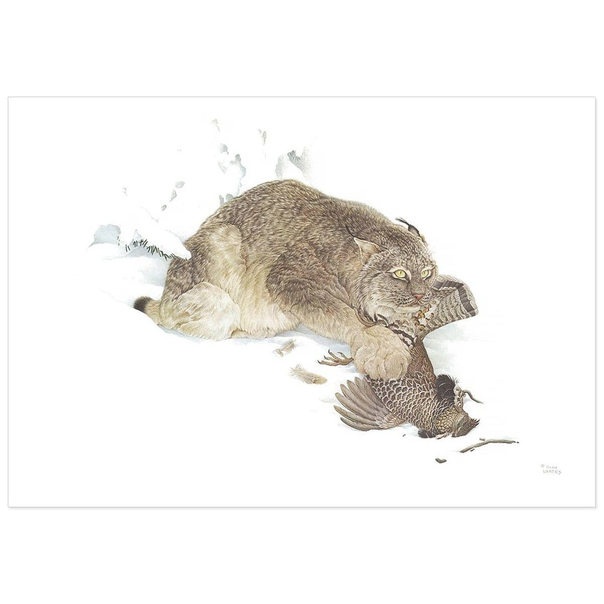 Canada Lynx With Ruffed Grouse - Art Print by Glen Loates from the Glen Loates Store