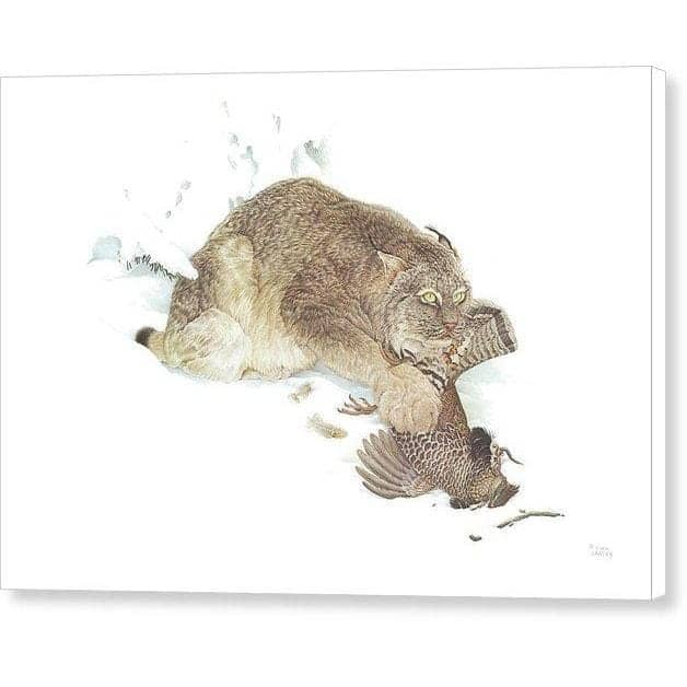 Canada Lynx with Ruffed Grouse - Canvas Print by Glen Loates from the Glen Loates Store