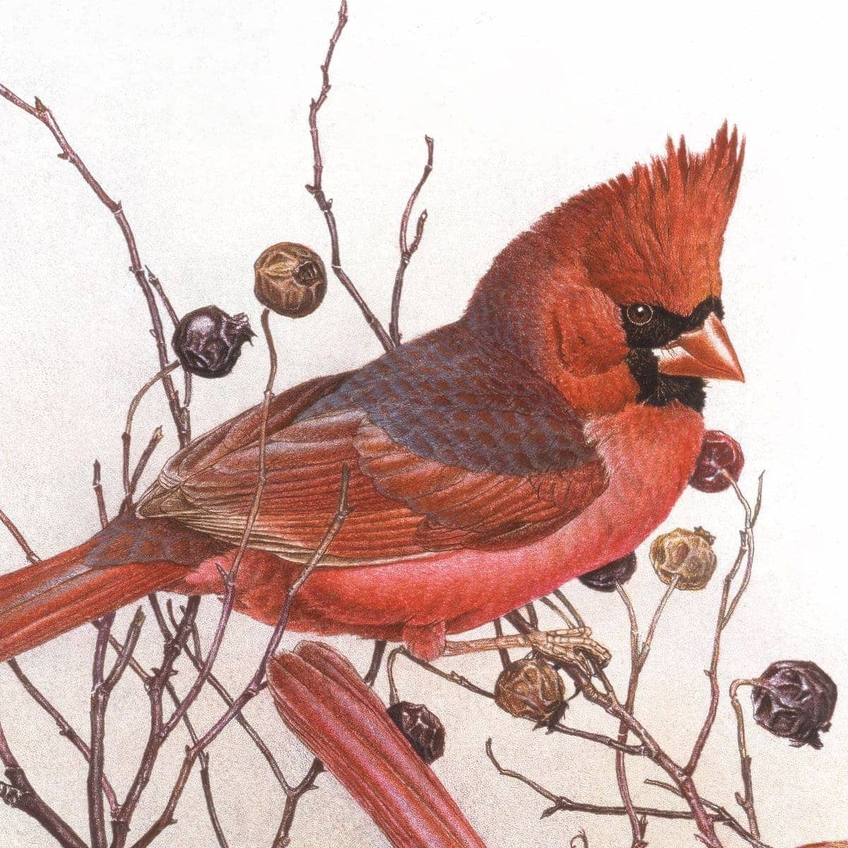 Cardinals In Nut Tree - Art Print by Glen Loates from the Glen Loates Store