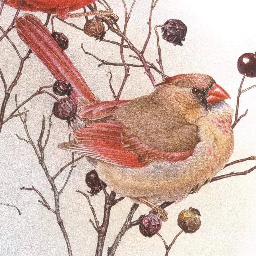 Cardinals on Rosehip Bush - Tote Bag