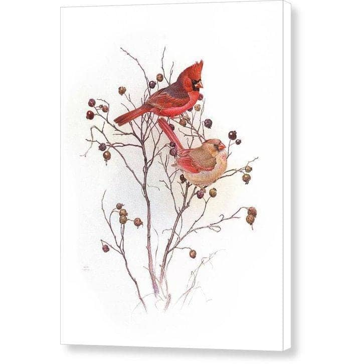 Cardinals in Nut Tree - Canvas Print by Glen Loates from the Glen Loates Store