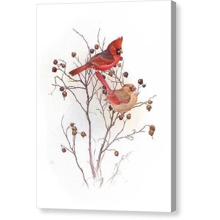 Cardinals in Nut Tree - Canvas Print-Canvas Print-The Official Glen Loates Store