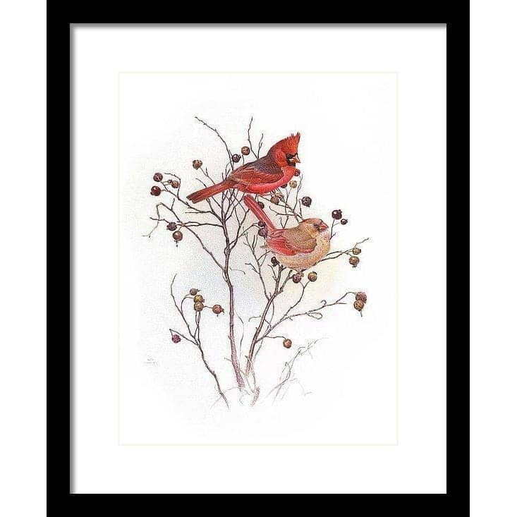 Cardinals In Nut Tree - Framed Print by Glen Loates from the Glen Loates Store