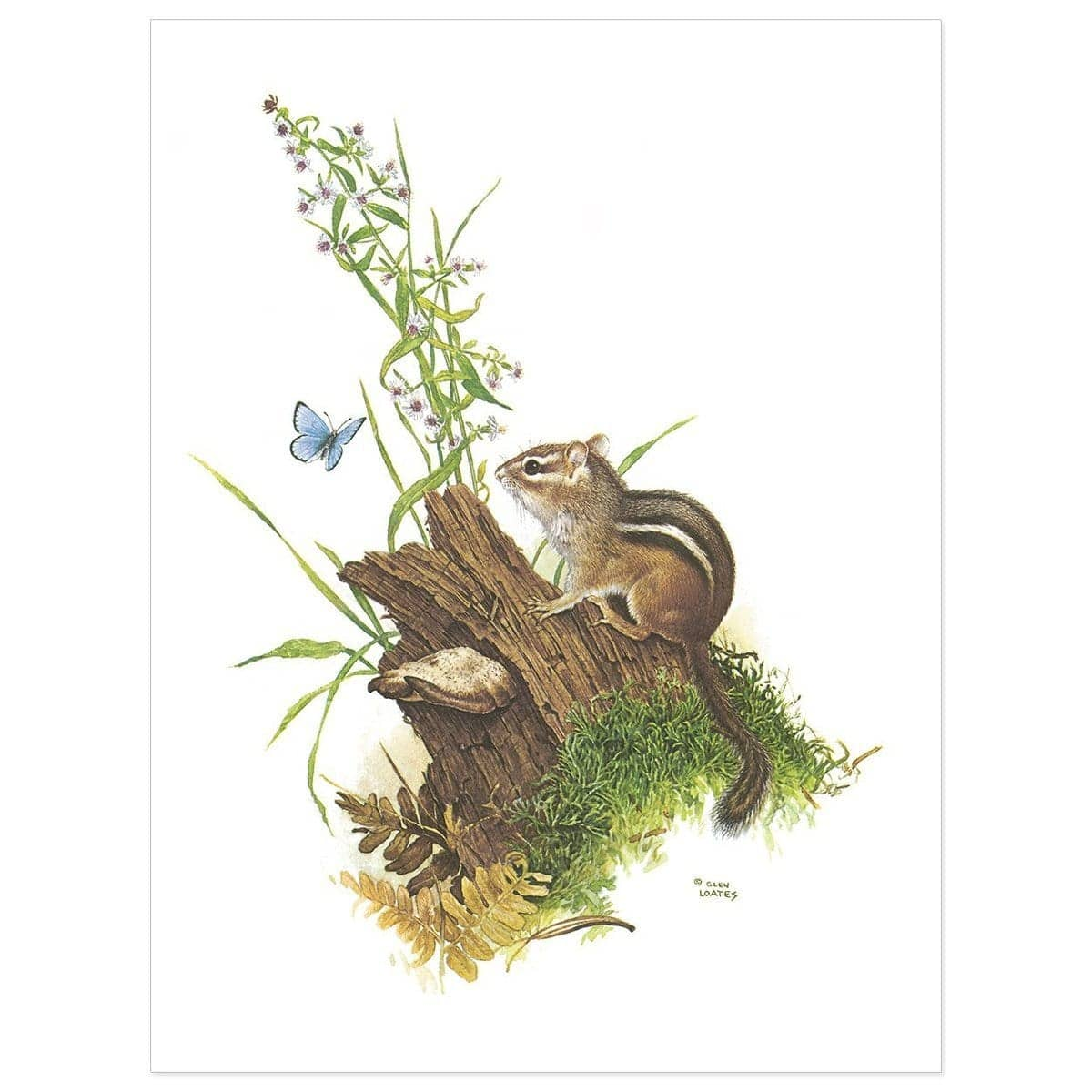 Chipmunk And Woodland Blue Butterfly - Art Print by Glen Loates from the Glen Loates Store