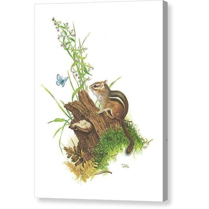 Chipmunk and Woodland Blue Butterfly - Canvas Print by Glen Loates from the Glen Loates Store