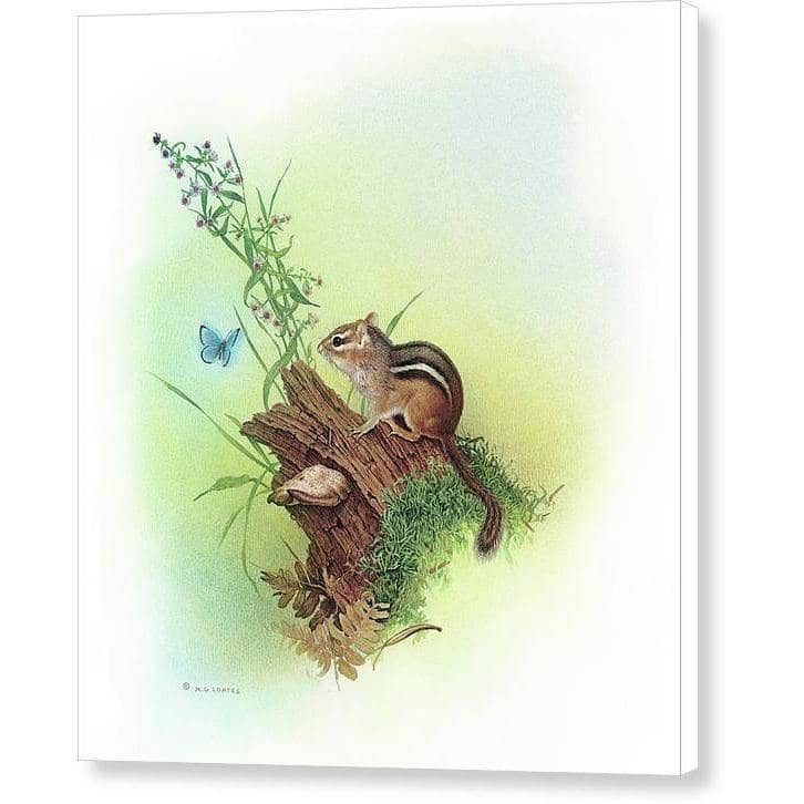 Chipmunk and Woodland Blue Butterfly Enhanced - Canvas Print | The Official Glen Loates Store