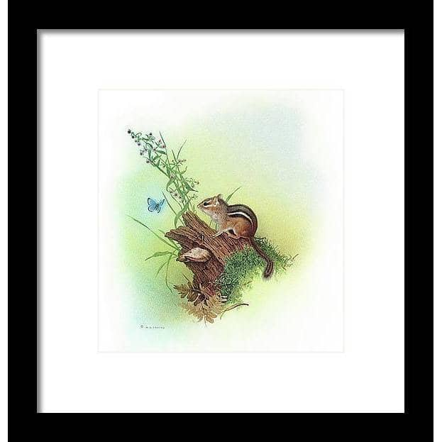 Chipmunk and Woodland Blue Butterfly Enhanced - Framed Print | The Official Glen Loates Store