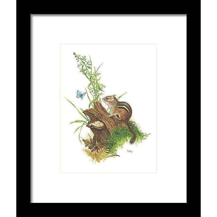 Chipmunk and Woodland Blue Butterfly - Framed Print by Glen Loates from the Glen Loates Store