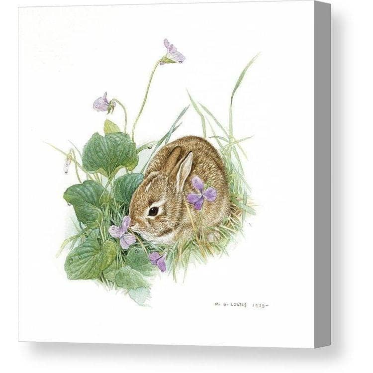 Cottontail Rabbit with Violet- Canvas Print by Glen Loates from the Glen Loates Store