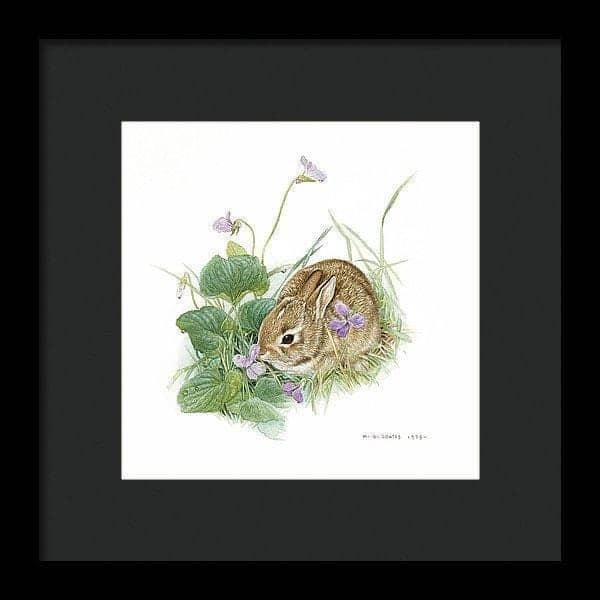 Cottontail Rabbit with Violet - Framed Print by Glen Loates from the Glen Loates Store