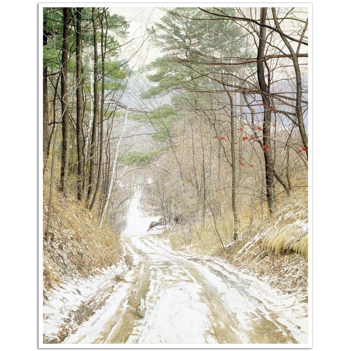 Cottontail Run - Art Print by Glen Loates from the Glen Loates Store