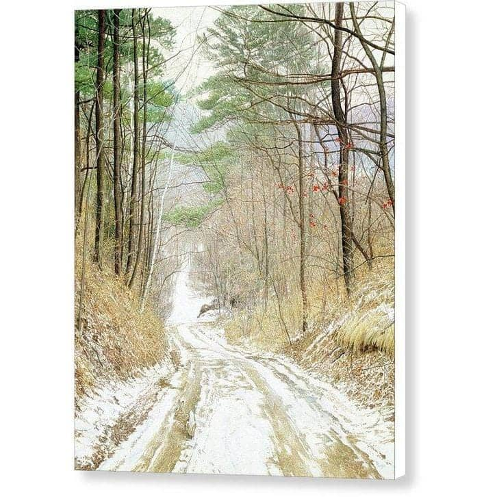 Cottontail Run - Canvas Print by Glen Loates from the Glen Loates Store