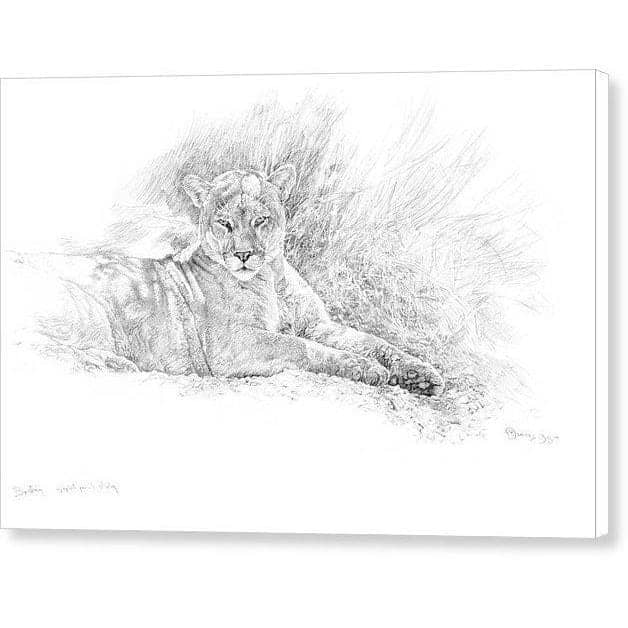 Cougar Basking - Canvas Print by Glen Loates from the Glen Loates Store