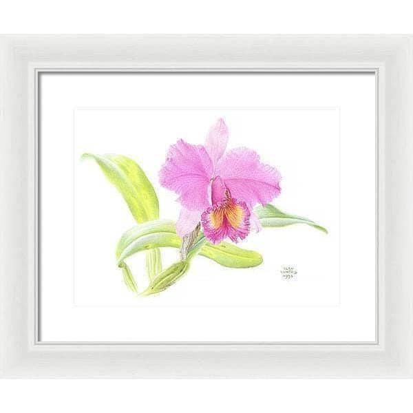 Crimson Cattleya Orchid - Framed Print by Glen Loates from the Glen Loates Store
