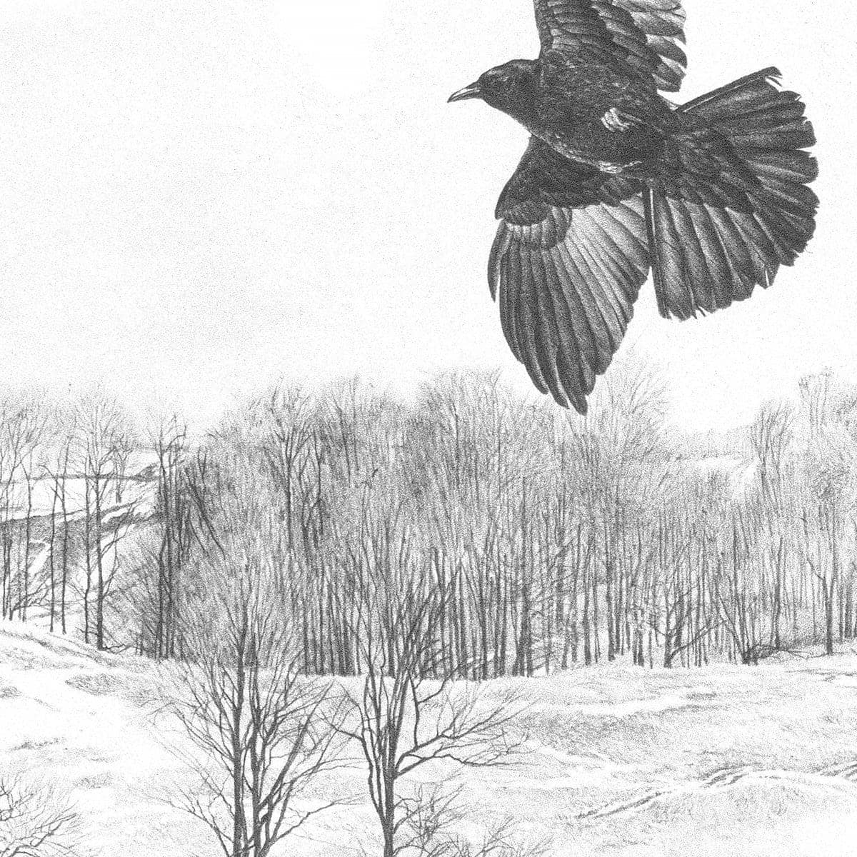 Crow Flying Over Landscape - Art Print by Glen Loates from the Glen Loates Store