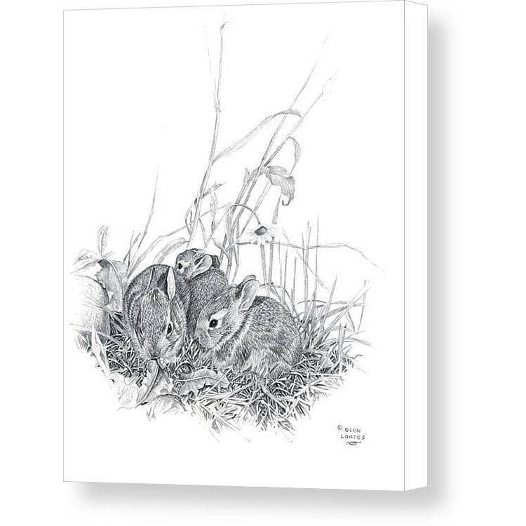 Eastern Cottontail Bunnies - Canvas Print
