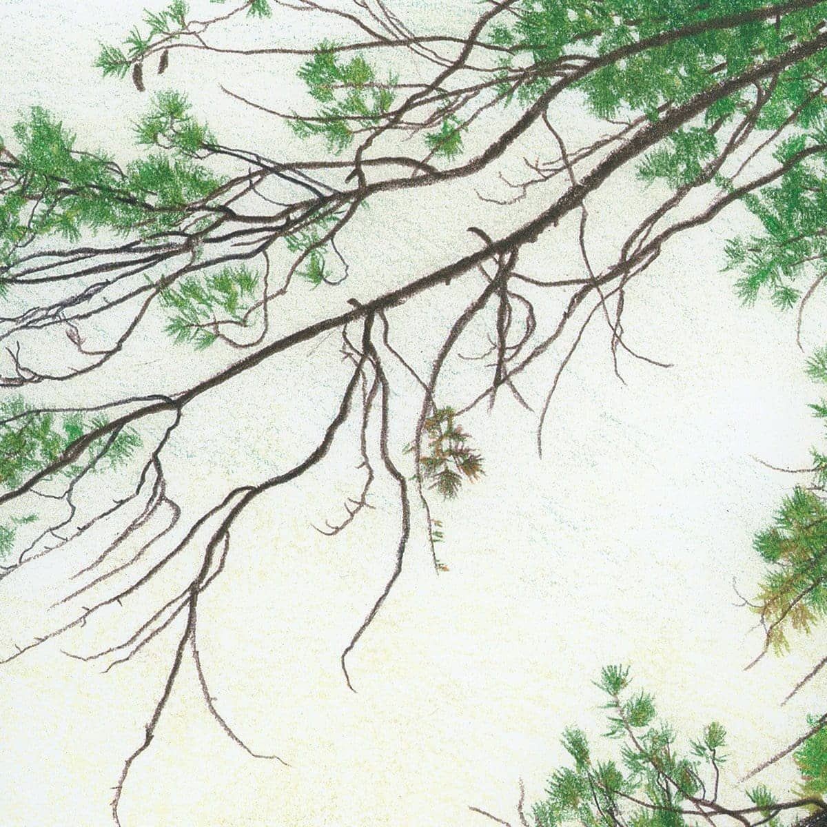 Eastern White Pine - Art Print by Glen Loates from the Glen Loates Store