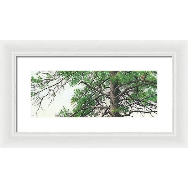 Eastern White Pine - Framed Print by Glen Loates from the Glen Loates Store
