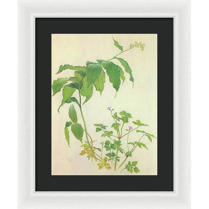 False Solomon's Seal and Herb-Robert Study - Framed Print | The Official Glen Loates Store