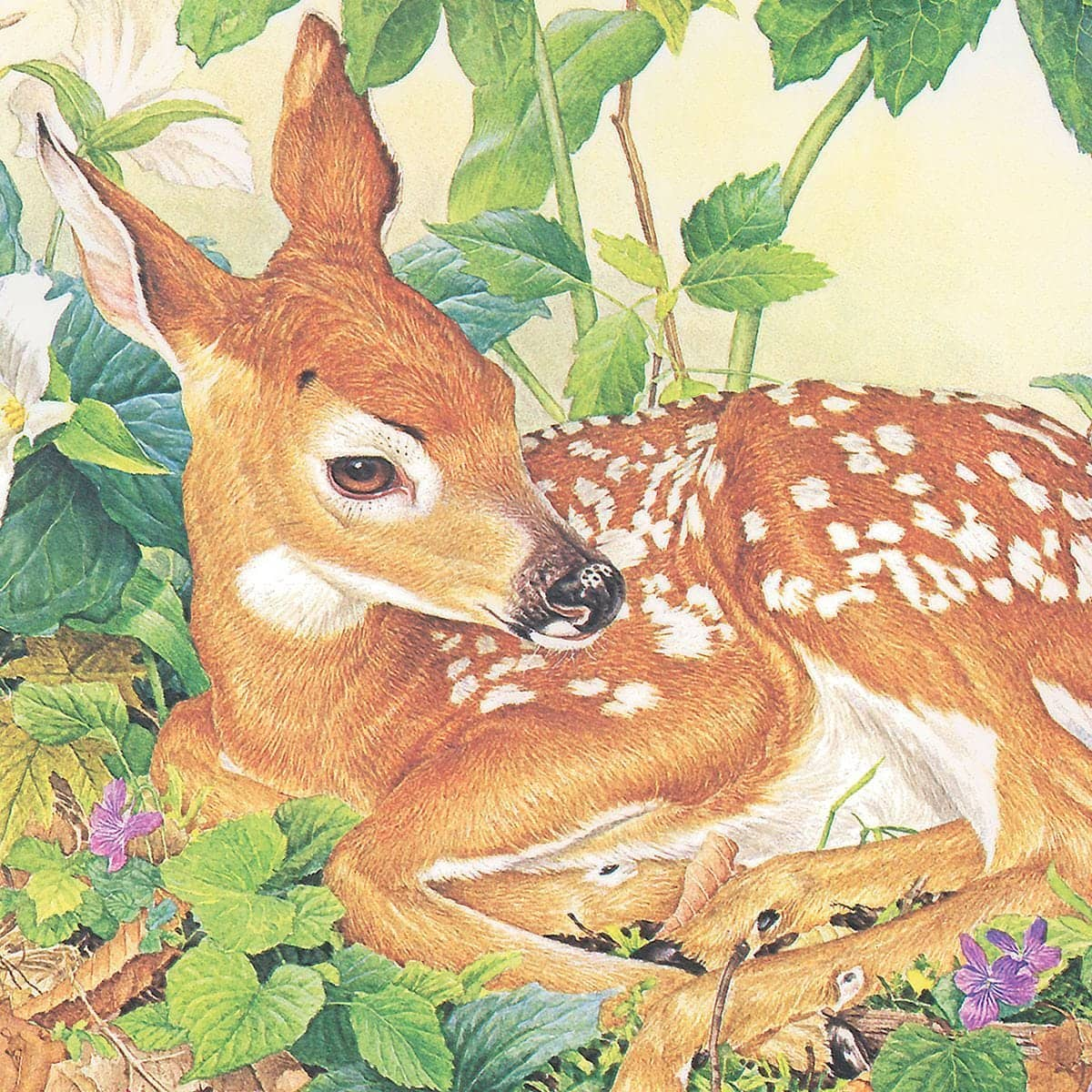 Fawn - Art Print by Glen Loates from the Glen Loates Store