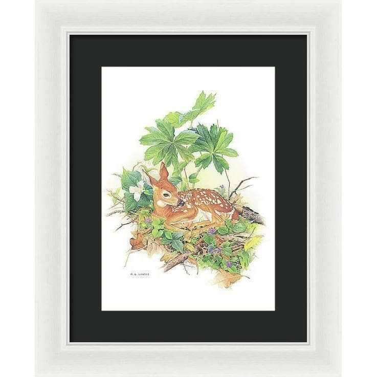 Fawn - Framed Print by Glen Loates from the Glen Loates Store