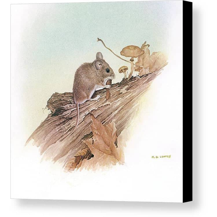 Field Mouse - Canvas Print