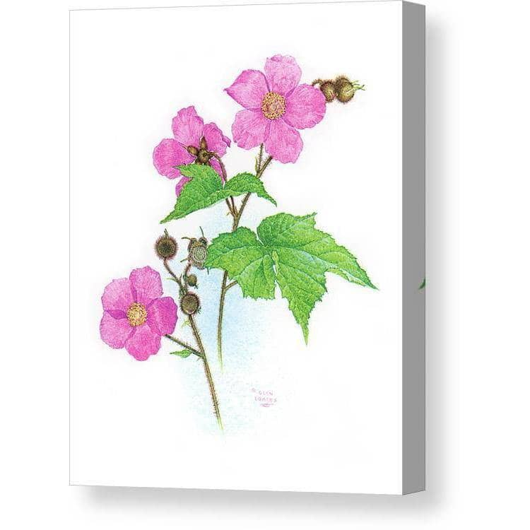 Flowering Raspberry - Canvas Print | The Official Glen Loates Store