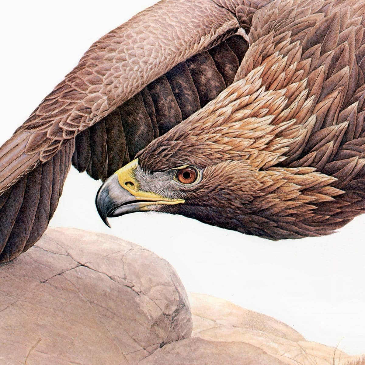 Golden Eagle - Art Print by Glen Loates from the Glen Loates Store