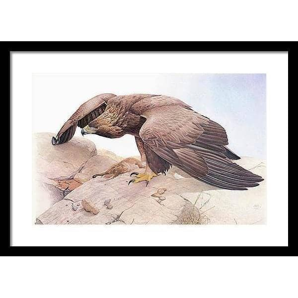 Golden Eagle - Framed Print by Glen Loates from the Glen Loates Store