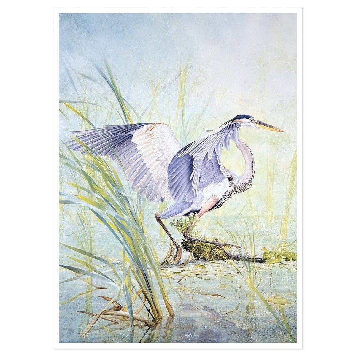 Great Blue Heron - Art Print by Glen Loates from the Glen Loates Store