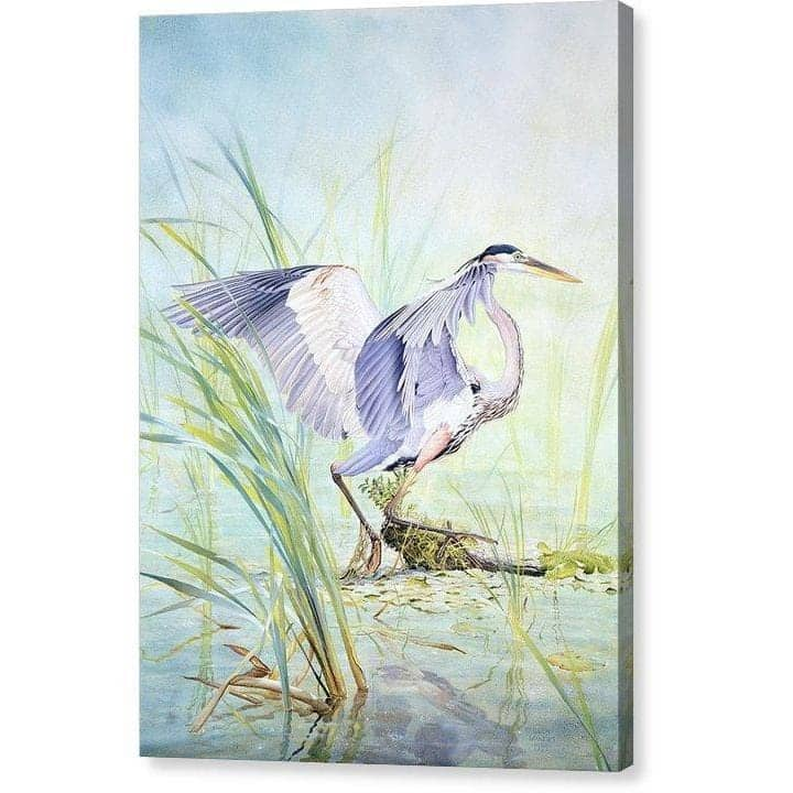 Great Blue Heron - Canvas Print by Glen Loates from the Glen Loates Store