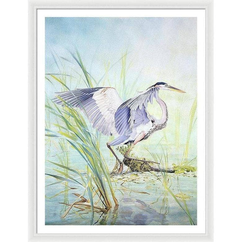 Great Blue Heron - Framed Print by Glen Loates from the Glen Loates Store