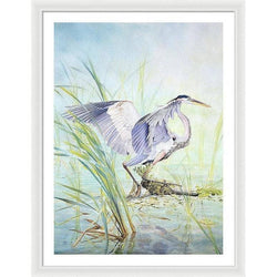 Great Blue Heron - Framed Print