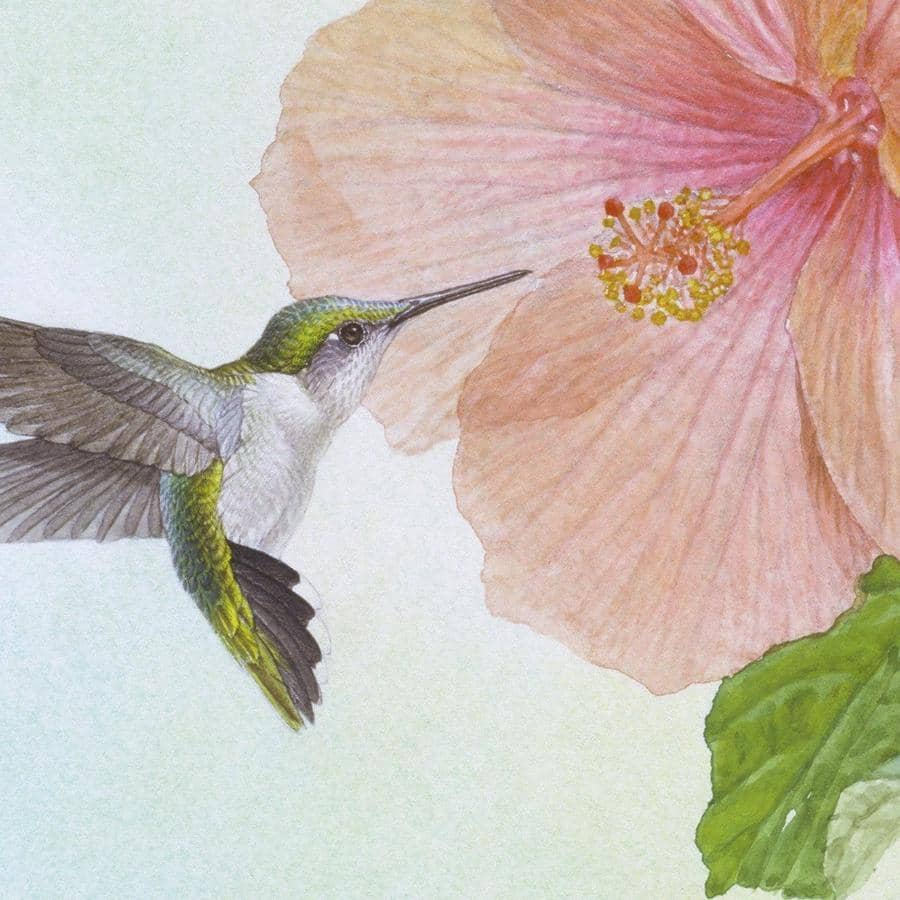 Hummingbirds and Hibiscus - Canvas Print by Glen Loates from the Glen Loates Store