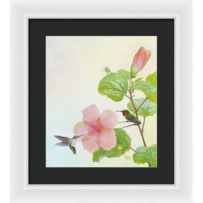 Hummingbirds and Hibiscus - Framed Print by Glen Loates from the Glen Loates Store