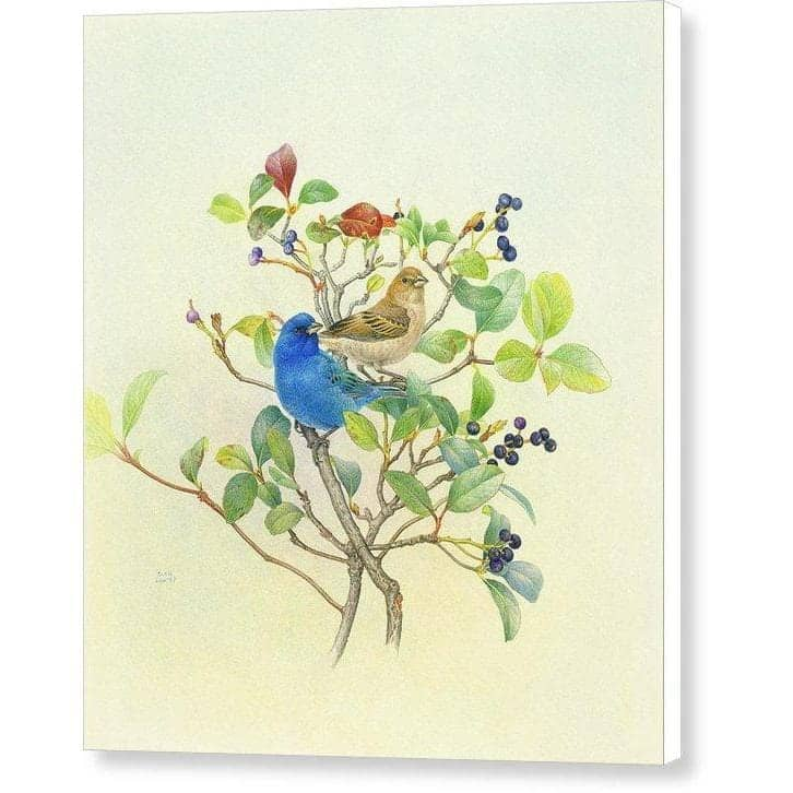 Indigo Buntings - Canvas Print by Glen Loates from the Glen Loates Store