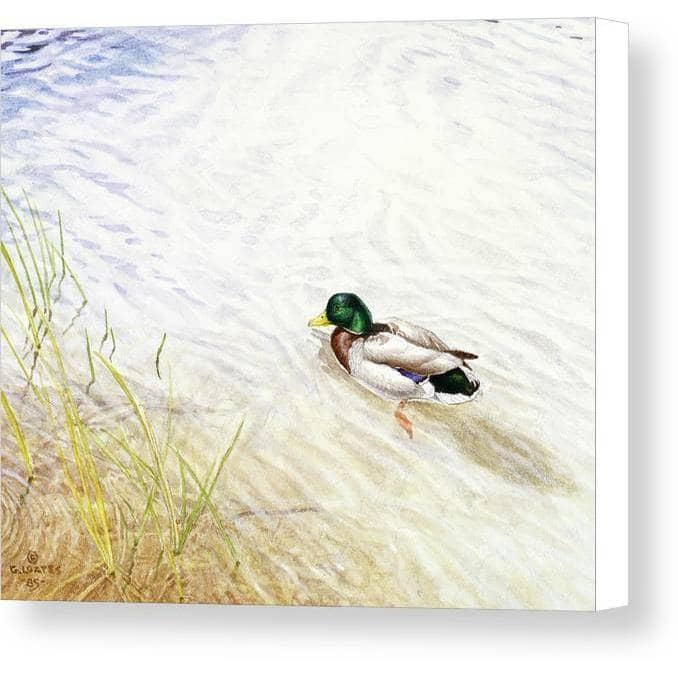 Into The Shallows - Canvas Print - The Official Glen Loates Store