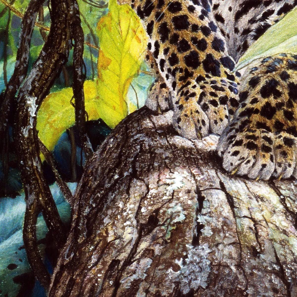 Jaguar Cub - Art Print by Glen Loates from the Glen Loates Store